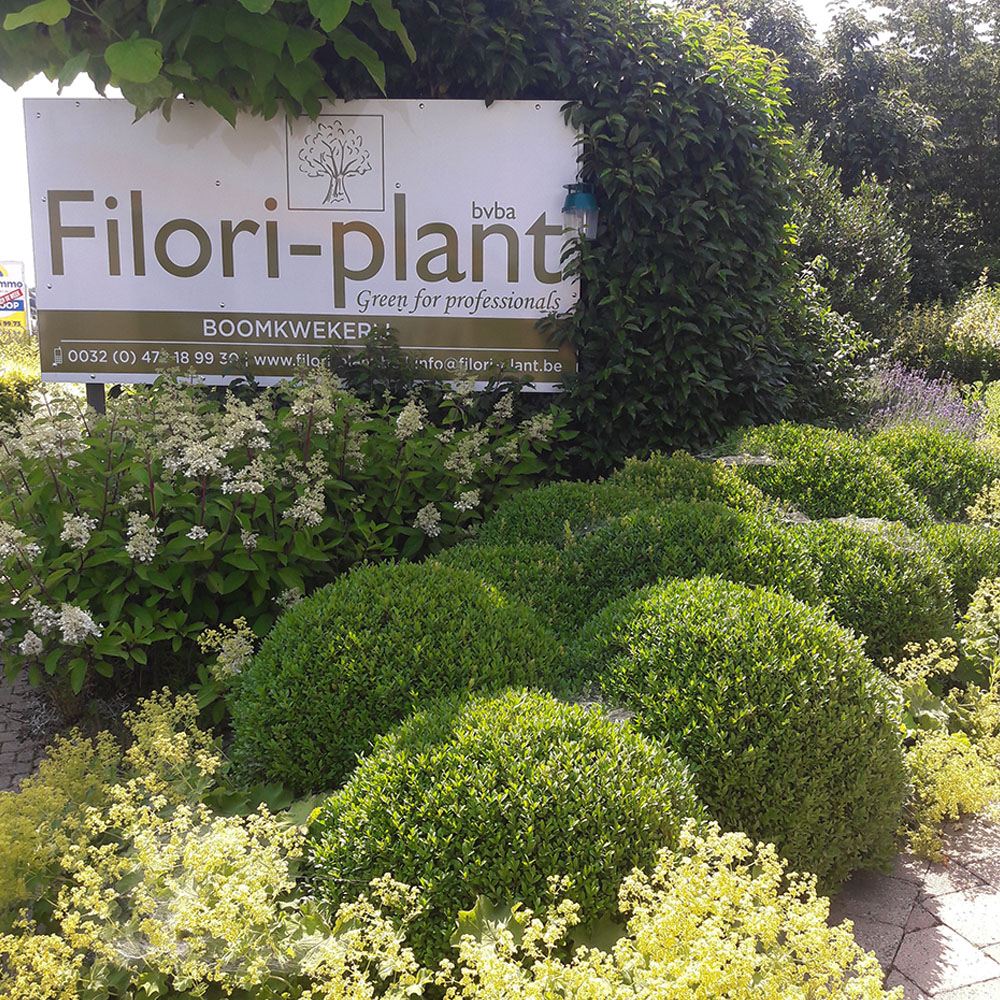 Filori-Plant Over Ons